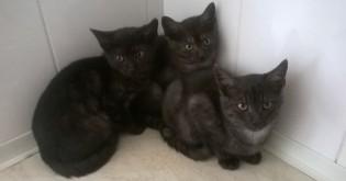 Kočičí trojčátka hledají své nové domovy !!