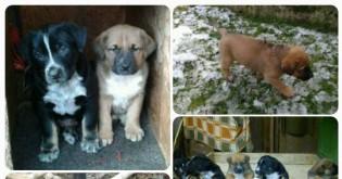 Pomozte najít psím miminkům nové domovy!!
