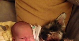 Psí a dětská láska
