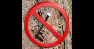 Hřebíky do stromů nepatří !