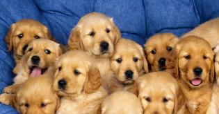 Jak správně socializovat psa?