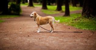 Co dělat, když se Vám ztratí pes?