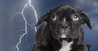 Když se pes bojí bouřky...