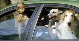 Nenechávejte psa v létě v autě!!!