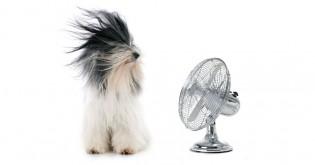 Pes a ochlazování