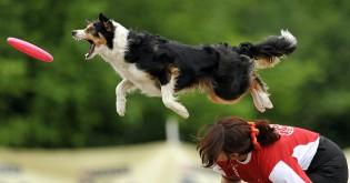 Psí sporty - 7. díl - Dogfrisbee
