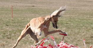 Psí sporty - 4. díl - Coursing