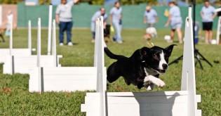 Psí sporty - 11. díl - Flyball