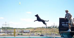 Psí sporty - 5. díl - Dock jumping