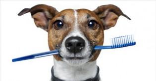 Jak pečovat o zuby a chrup pejska?