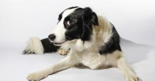 """Proč psi """"prdí"""" a co s tím může """"páníček"""" dělat?"""