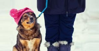 Co říká veterinář: Oblečený pes – ano či ne?