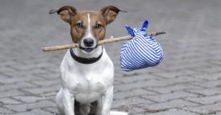 Zatoulaný pes může už za 2 měsíce patřit někomu jinému!!!