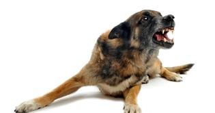 Agresivita u psů