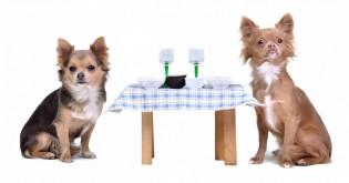 Chodíte se psem do restaurací?
