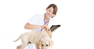 Vše o očkování psů