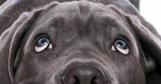Proč nechovat psy bez průkazu původu?