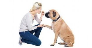 Deset základních povelů pro psy a jak na ně!