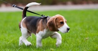 Jak posílit imunitu u psů?