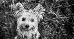 Jak na psí triky II - POPROS