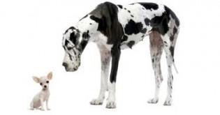 Chci si pořídit velkého psa. Na co se připravit?