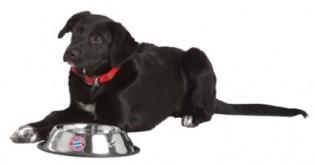 Nejčastější chyby v krmení psů: Neděláte je také?