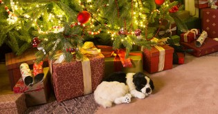 Živý vánoční dárek