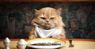 Potraviny a nápoje nebezpečné pro kočky