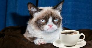 Kočičí kavárny jsou u nás stále častější