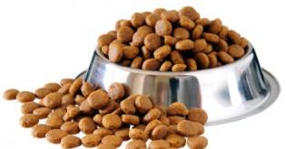 7 chyb, které děláme při uskladňování granulí pro psy