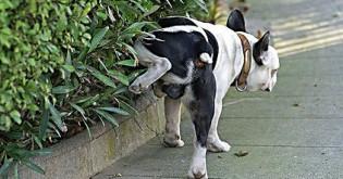 Co dělat se psem, který doma značkuje