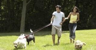 Jak sbalit životního partnera? Běžte venčit psa!