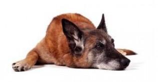 V jakých ohledech je třeba o psa seniora pečovat jinak