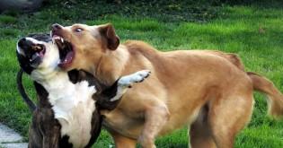 Jak řešit rvačku mezi psy