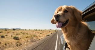 Bezpečná přeprava psů v autě