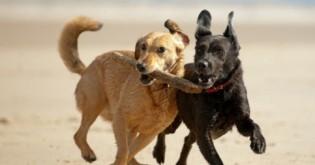 5 znaků, že by váš pes uvítal čtyřnohého společníka