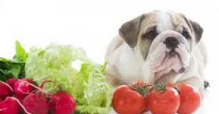 Jak naučit psy přijímat syrovou zeleninu