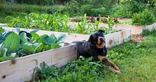 Desatero bezpečnosti na zahradě