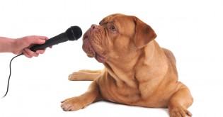5 chyb, kterých se nejčastěji dopouštíme při komunikaci se psy