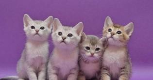 Zvýšená žíznivost kočky